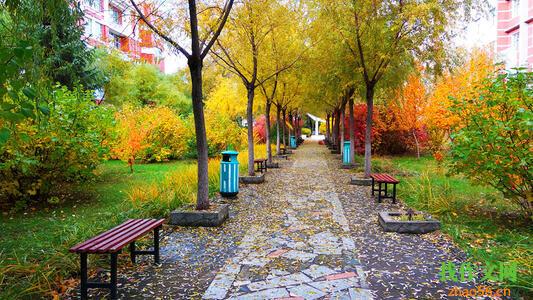 关于校园的作文:校园景色_500字